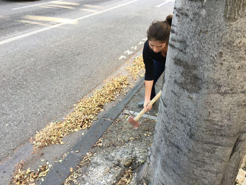 Liliane s'attaque au béton au pied des arbres.. à coups de marteau