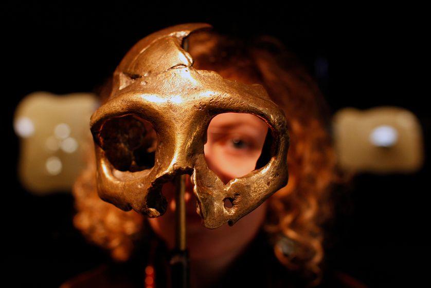 Réplique d'un crâne neandertalien au musée de l'Homme de Néandertal à Krapina (Croatie)