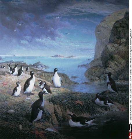 Pinguinus impennis, great auk, le grand pingouin: peinture à l'huile de John Gerrad Keulemans