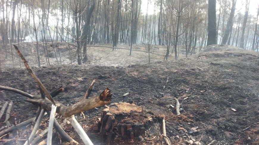 Mulsanne, le 11 juillet 2015. Plus de cent hectares ont brûlé cet été-là au sud du Mans.