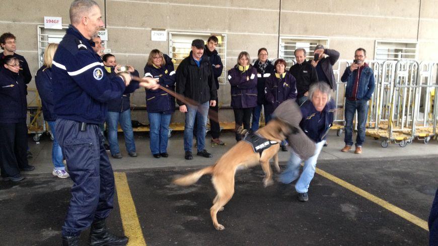 Eclaire, le chien de la gendarmerie, attaque une factrice