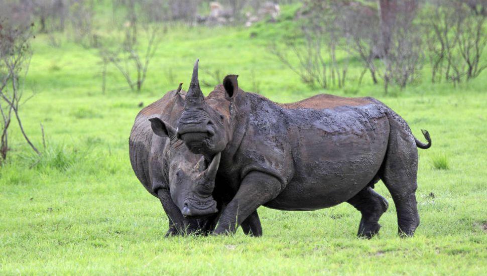 Deux Héraultais volent au secours des rhinocéros sud-africains