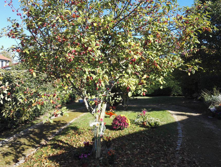 Dispersion des cendres jardin du souvenir avec les for Cendres dans le jardin