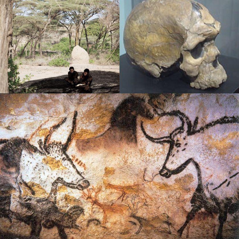 Photographie des peintures animales de Lascaux / Représentation de l'Homo erectus (Daka en Ethiopie) utilisant une hache à main / Crâne d'Homo sapiens idaltu.