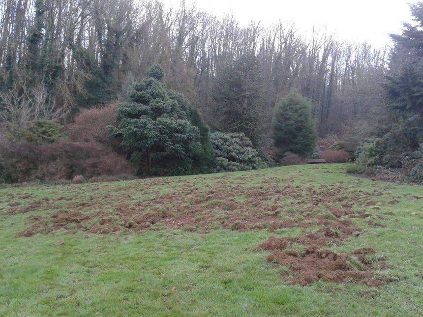 Le Jardin Botanique A Villers Les Nancy Ravage Par Des Sangliers