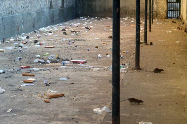 Dans une cour de la prison de Fresnes, les rats côtoient les déchets.