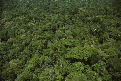Vue aérienne d'une forêt tropicale humide