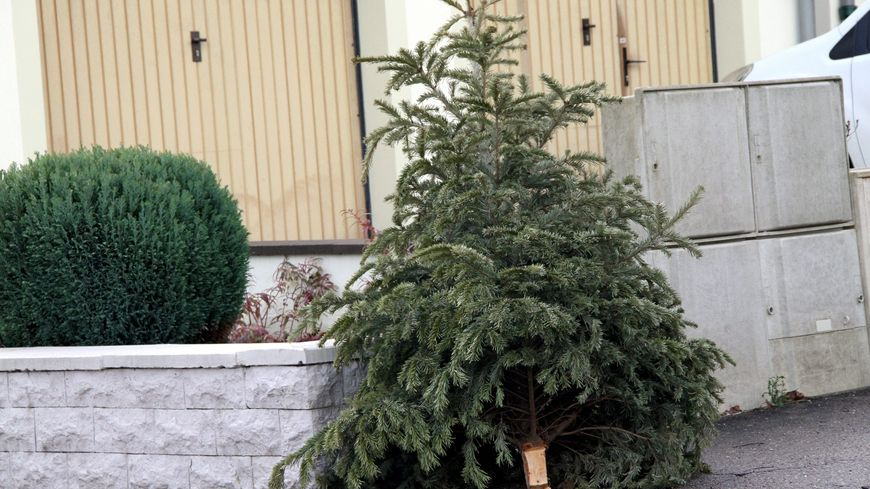 Pour la première fois à Châteauroux, les sapins de Noël sont collectés pour ensuite être recyclés.