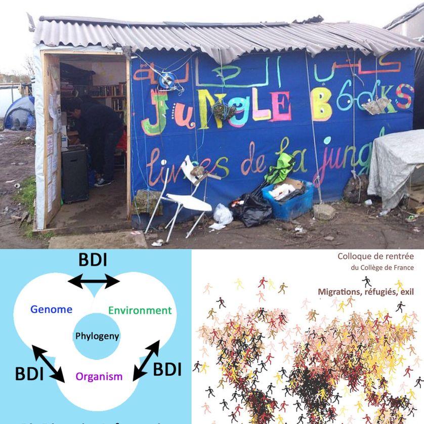 """Bibliothèque dans """"la jungle"""" de Calais (camps de réfugiés) / Schéma informatique de la biodiversité (phylogénie)  / Collège de France"""