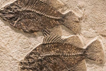 Des poissons fossiles trouvés en Ontario (Canada)