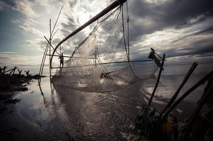 Dulen Mili (35 ans) pêche avec un filet traditionnel sur le Brahmapoutre, près de Modarguri.