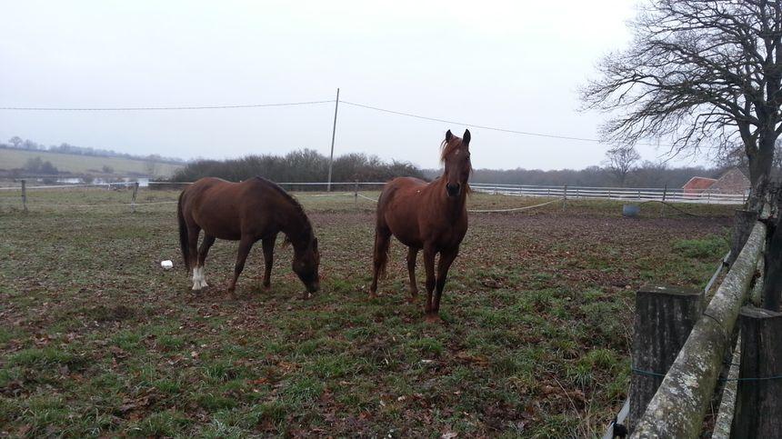 L'éleveuse de pur-sang estime que ses chevaux sont stressés par les tirs la nuit contre les cervidés, tout comme elle d'auilleurs