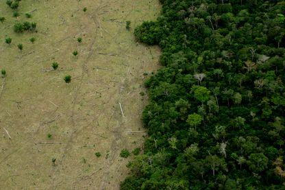 Cap sur l'Amazonie où le CIRAD a mis au point une cartographie du stockage du carbone après une exploitation forestière.