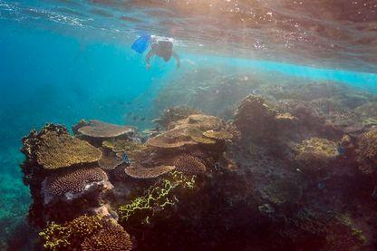 Inspection de la grande barrière de corail par un ranger Australien.