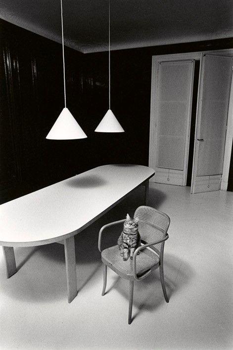 Chat solitaire dans un environnement inhospitalier. Paris, 1973