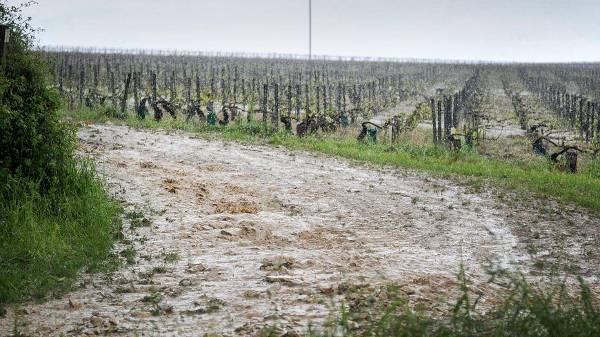 23 communes en calamité agricole pour la grêle du 17 août 2016
