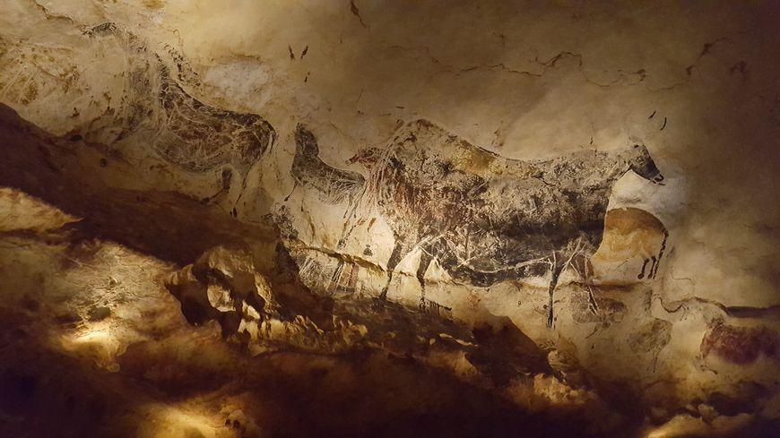 La vache noire n'a jamais été montrée dans ces conditions auparavant.