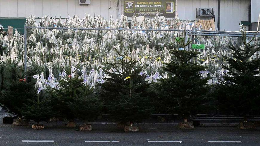 Forêt de sapins de Noël à Rungis.