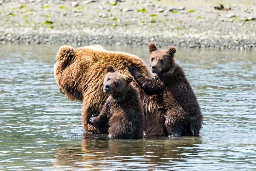 Silver Salmon Creek en Alaska
