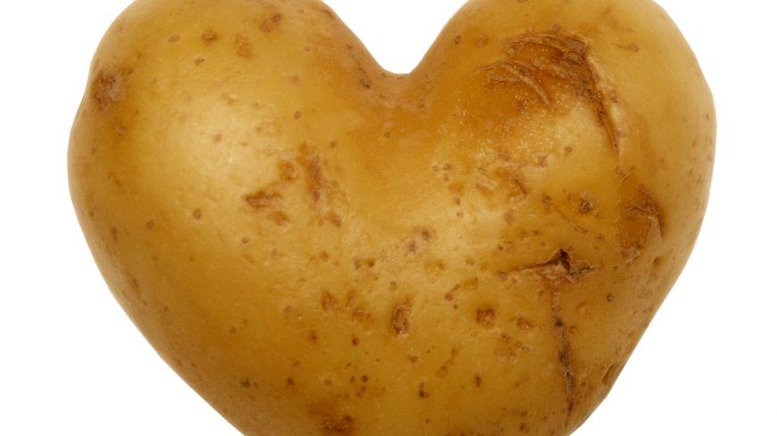 La pomme de terre, un trésor à redécouvrir