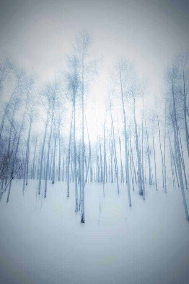 """Sylvie Chocron : """"On sait que les gens qui vivent des forêts très denses n'apprennent pas à voir au loin. Quand on va leur présenter un objet au loin, vont l'interpréter comme étant petit. En revanche ils ont une meilleure acuité visuelle"""""""