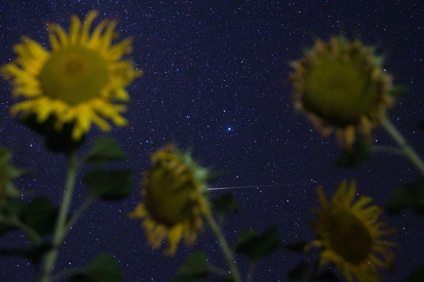 Champs de Tournesol sous les étoiles