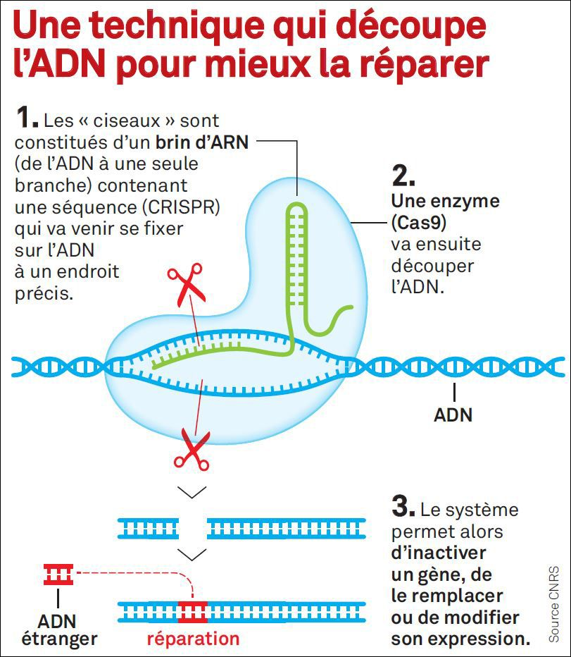 Explications de CRISPR Cas-9
