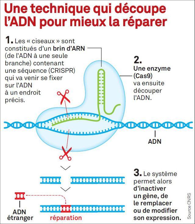 Explications de CRISPR Cas-9