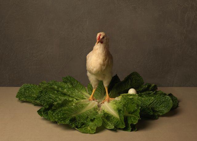 La salade Caesar