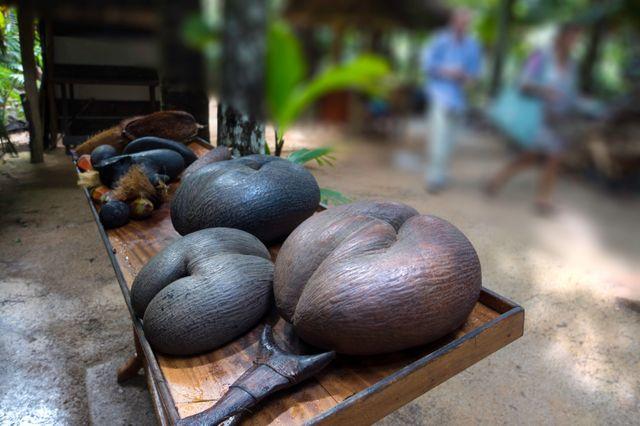 Le coco de mer ou coco fesses en voie de disparition
