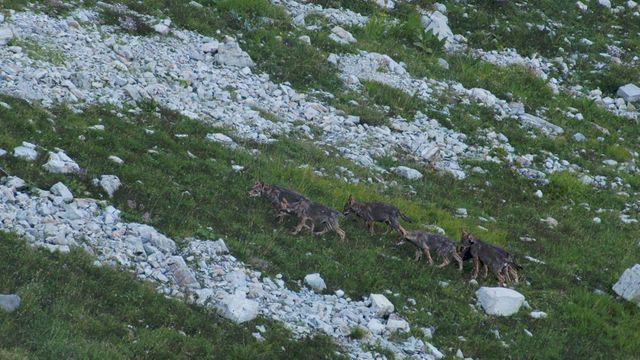 """Image extraite de """"La vallée des loups"""""""