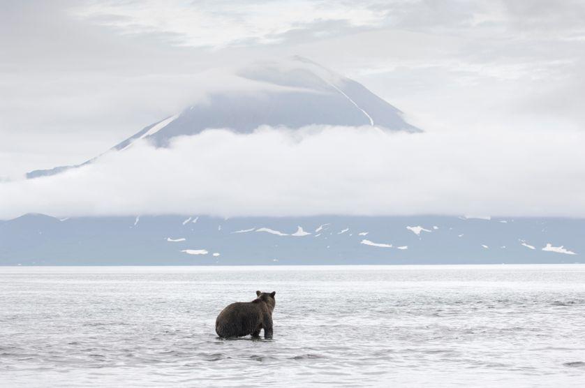 Photo de Vincent Munier, Ours brun devant le volcan Ilinski, Kamtchatka (Russie), 2005