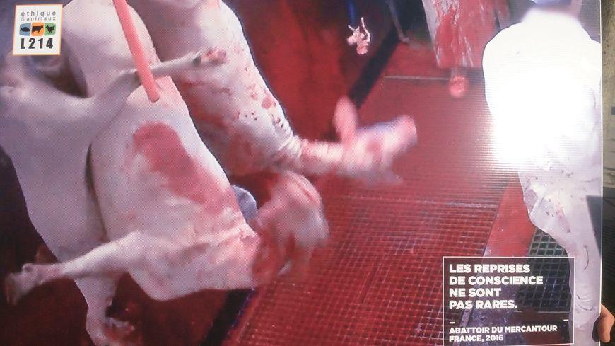 Expérimentation de la vidéo dans les abattoirs : un compromis qui ne satisfait pas grand-monde