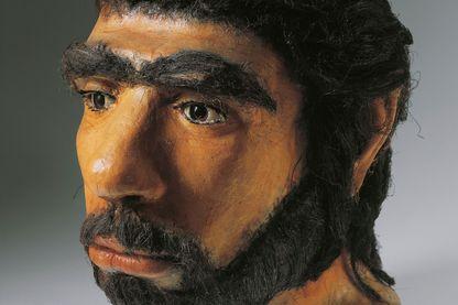 Reconstitution d'une tête d'Homme de Néandertal