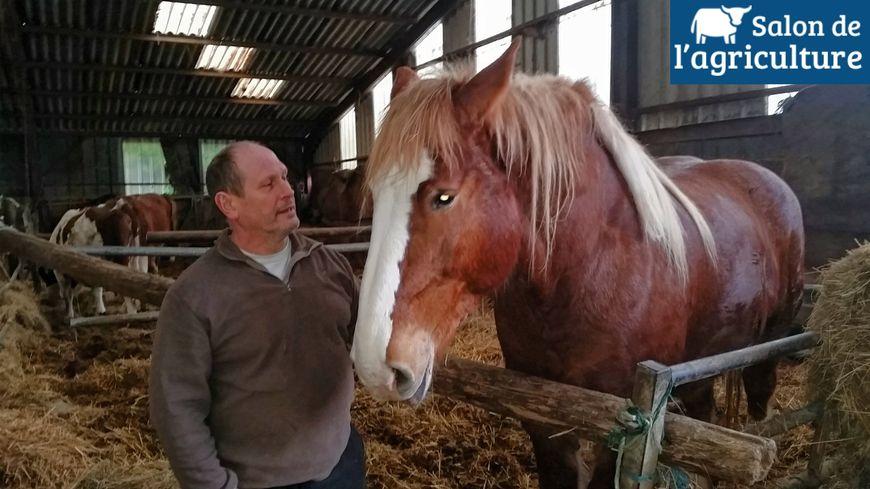 C l nia un cheval de trait ardennais au salon de l - Midi en france salon de l agriculture ...