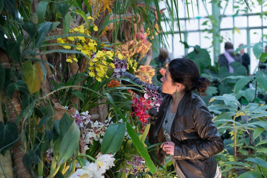 PHOTOS - Mille et une Orchidées au Jardin des Plantes à Paris