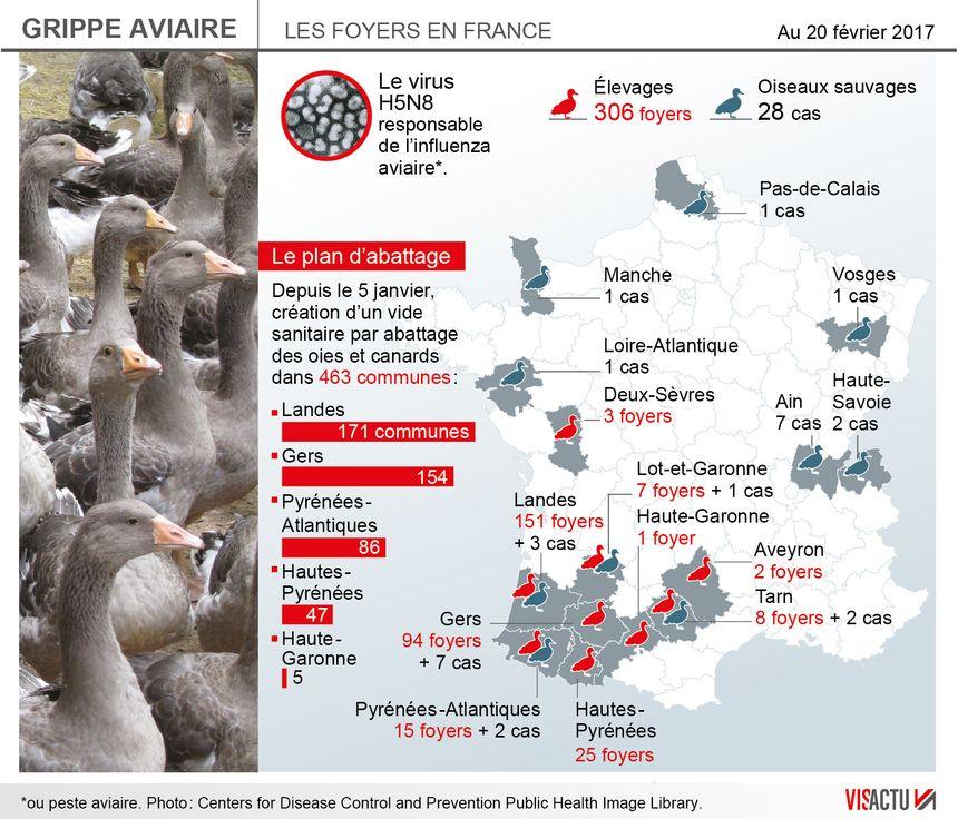 Grippe aviaire : vers l'abattage des 600 000 canards dans les élevages des Landes