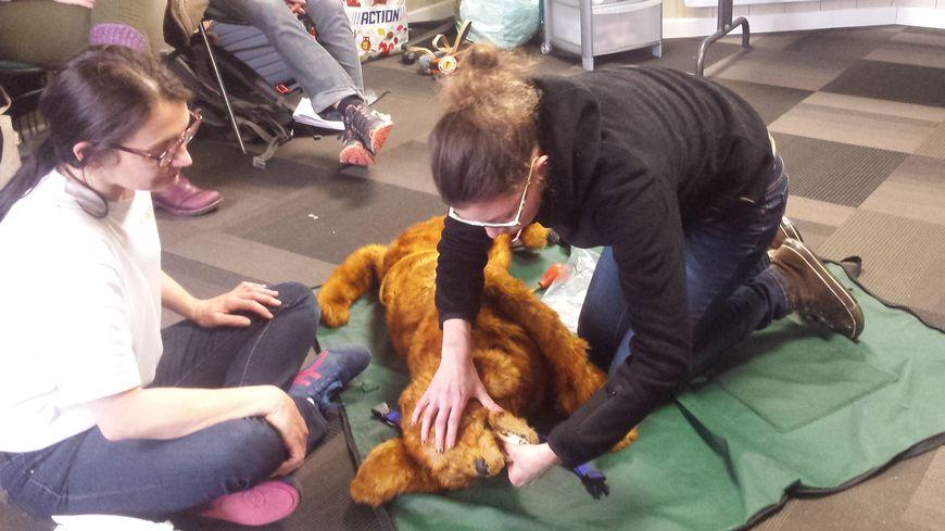 Une vingtaine de participants ont suivi le cours de Kimberley Johnson pour apprendre les gestes de premiers secours sur les animaux domestiques.
