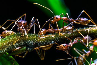 Gros plan de fourmis la nuit