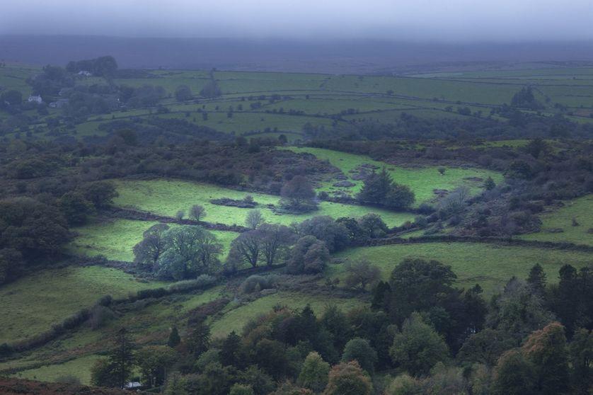 Paysage de bocage brumeux, Devon