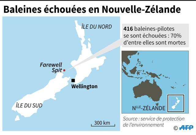 Le lieu d'échouage des baleines en Nouvelle-Zélande