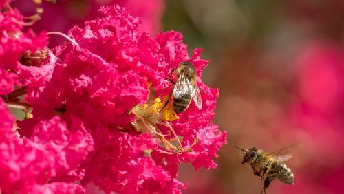 Épisode 8 : Pollinisation… !!!