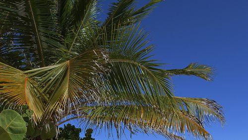 Épisode 10 : Seul, sous les cocotiers
