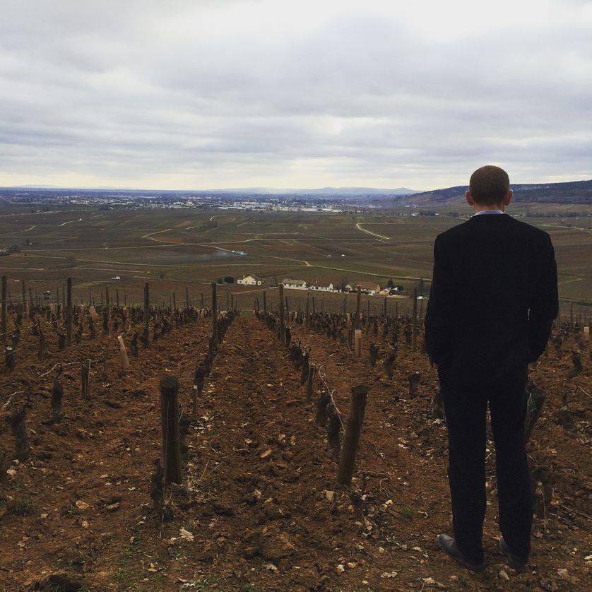 Boris Champy, directeur technique du Domaine Louis Latour, sur la colline de Corton.