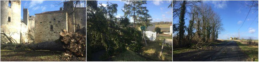 Des arbres couchés par le vent, samedi matin en Dordogne
