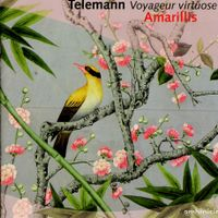Sonate en trio en ré min twv 42:d10 pour flûte a bec violon et basse continue : Allegro - Ensemble Amarillis