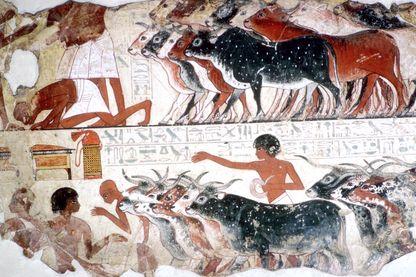La mort des troupeaux, parmi les dix plaies d'Egypte, fresque de la tombe de Nebamon à Thèbes, conservé au British Museum