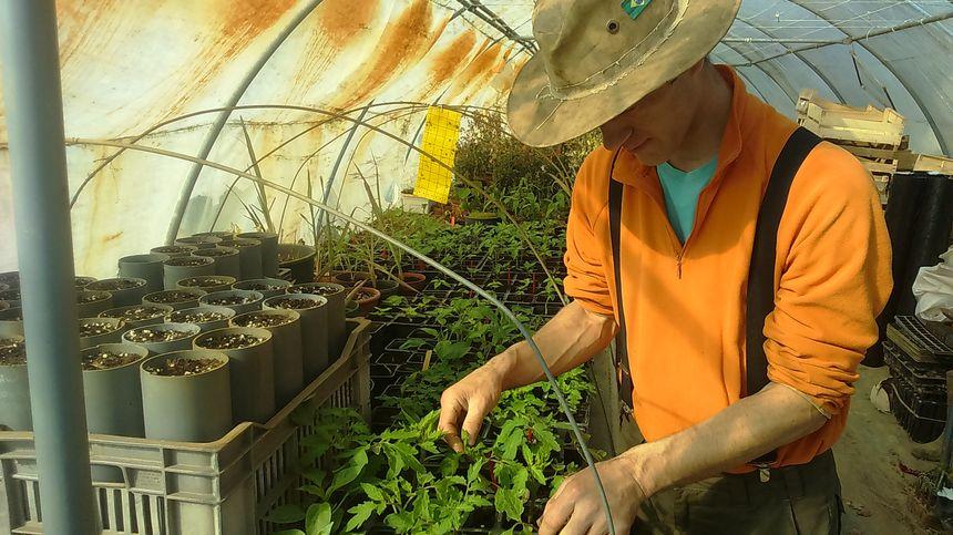 Thomas Jagu n'utilise aucun pesticide. Si besoin, il pulvérise du savon noir, mais se repose surtout sur ces insectes auxiliaires pour mener la lutte biologique.