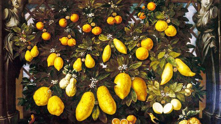Arance, Bergamotti, Cedri, Limoni e lumie