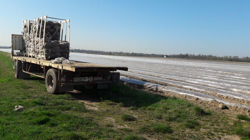 Le champs d'asperges d'Emmanuel Dollinger à Hoerdt